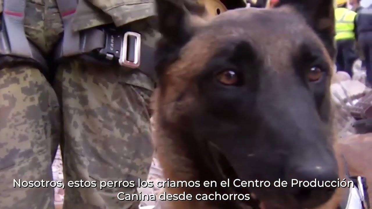 Cesar Millán reconoce a nuestros perros rescatistas ❤️🐶 | SISMO 19 Septiembre 2017