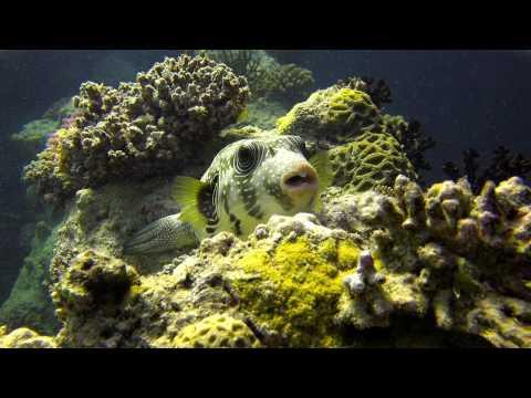 Red Sea - Trailer