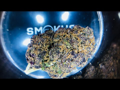 The Top Ten Amsterdam Coffeeshops With Jimmy Nevski - Part T