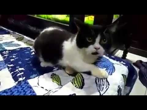 Cute adorable kitten really like to playing and exploring