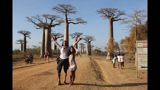 Группа DaVinci Madagascar