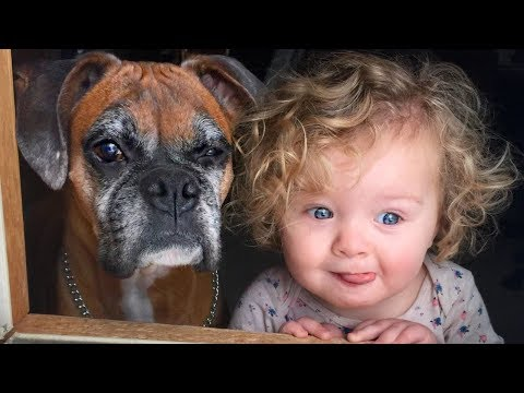 Boxer and Baby Compilation NEW