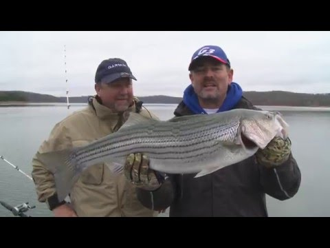 Battling Stripers on Beaver Lake in AR