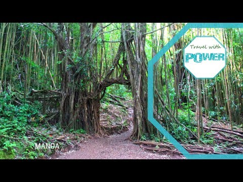 LOST Filming Locations Manoa Falls Oahu Hawaii
