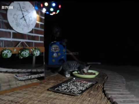 Cats Meok Bang : Stray Cats in South Korea [팝콘티비 BJ도둑고양이 나비월드]  160821 반팔이주니어 오전4시55