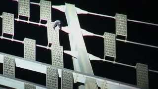 Homem-Aranha Francês escala a Torre Cayan em Dubai