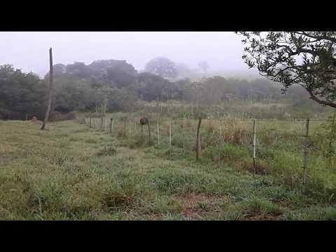 """Vida na Roça: """"Muita neblina ,e um passeio no meio do mato parte 1"""""""