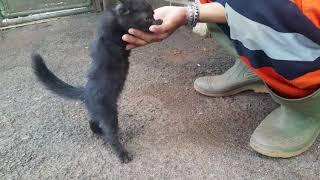 Download Video Dihampiri kucing liar kecil hitam imut, persia sepertinya MP3 3GP MP4