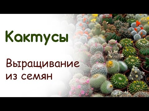 Кактусовые — Википедия