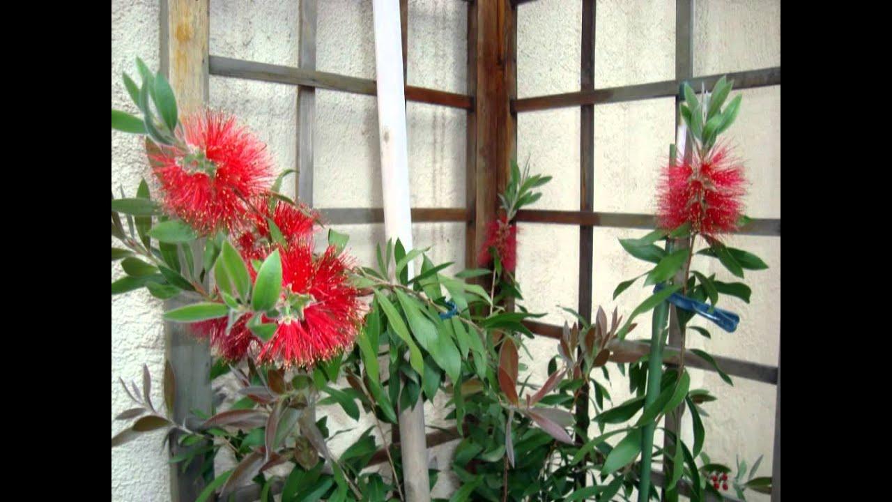 Mi terraza plantas y flores youtube for Plantas de terraza resistentes