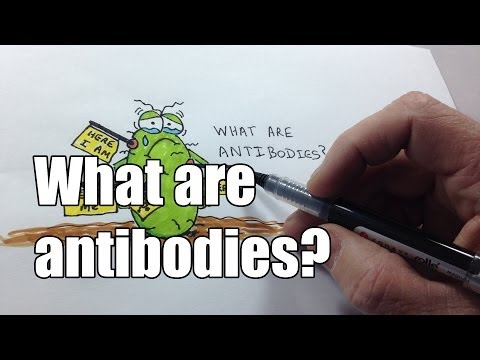 What are antibodies?
