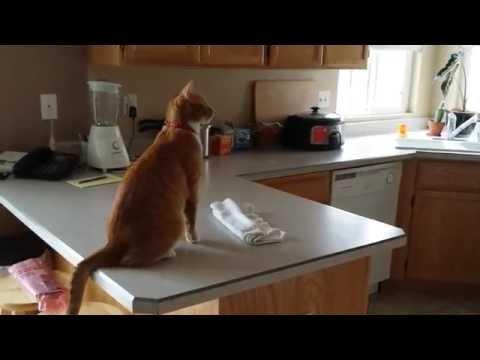 Cat Jump Fail Onto Fridge – Original
