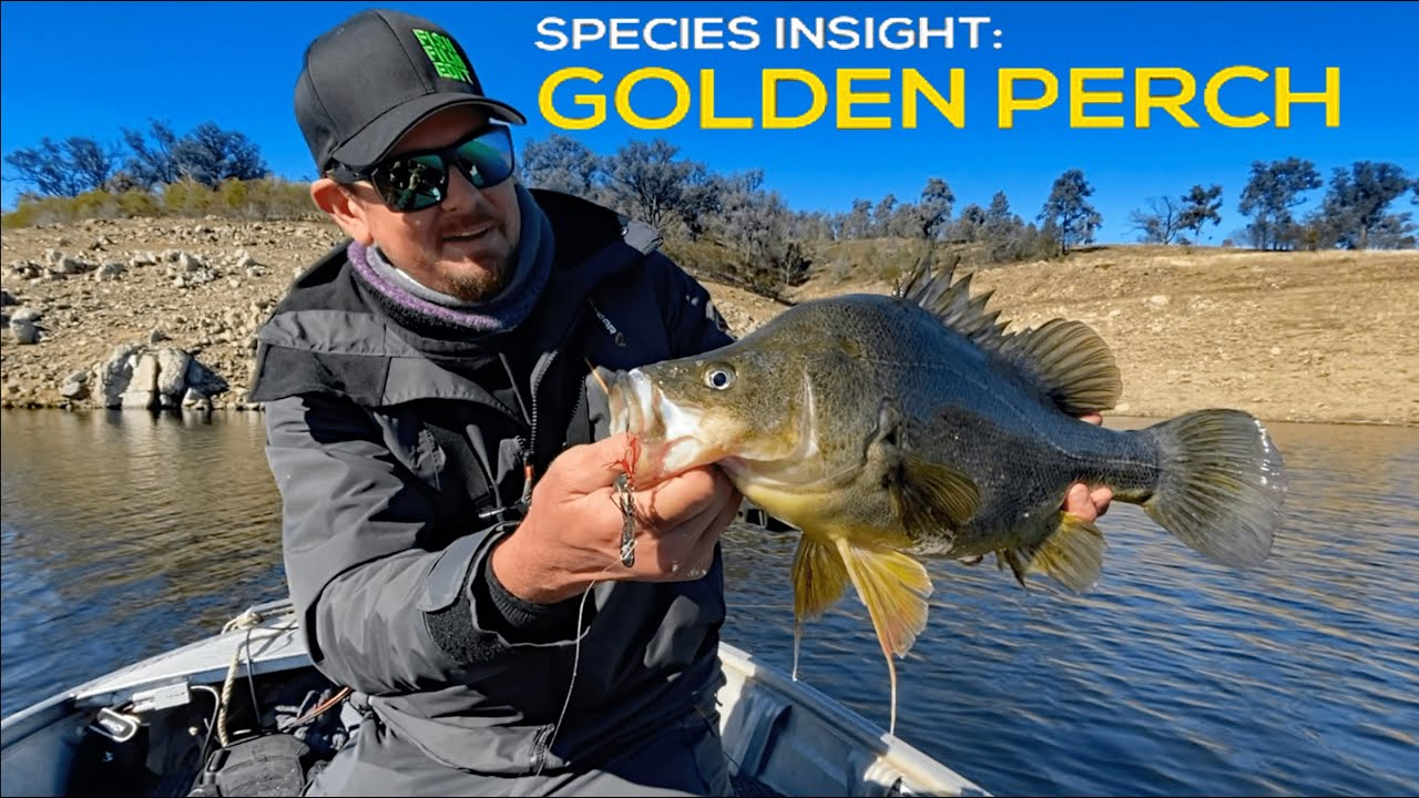 GOLDEN PERCH FISHING | Yellowbelly At Glenlyon Dam.