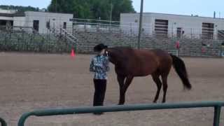 Repeat youtube video Horsemaster Project: Showmanship Training Tips
