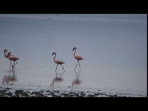 PB267252   Flamingos Abiata meer
