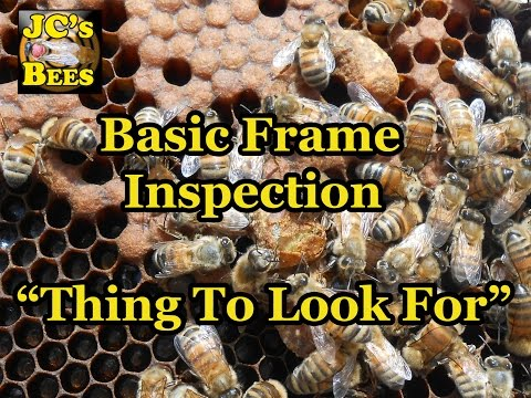 Bee Hive Frame Inspection / Things To Look For
