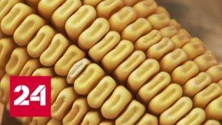 Компания Monsanto выплатит садовнику 290 млн долларов - Россия 24