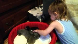 Наши котятки-всего 2недели)))милахи)))У Вареньки крутейшие колготки))))