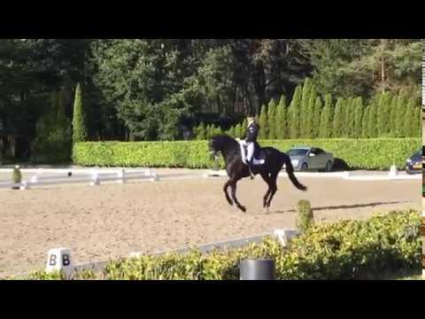 HORSES.NL: Grand Prix-debuut Glock