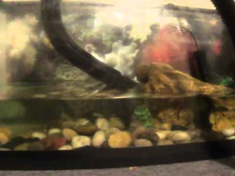 How to Clean a Turtle Tank Easy!!