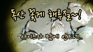 금어기전 독산 꽃게 해루질~!