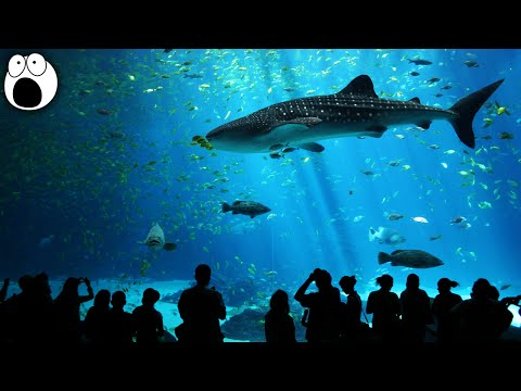 10 Most AMAZING Aquariums In The World