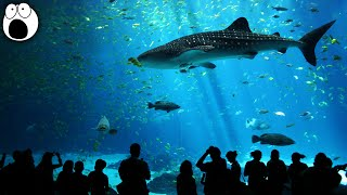 Amazing Aquariums In The World