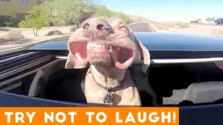 funny animals compilation