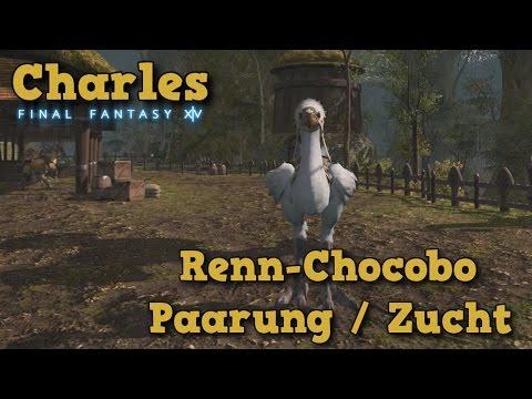 #121 Final Fantasy XIV - Renn-Chocobo Zucht-Guide /Chocobo paaren-züchten