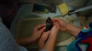 купание крыса
