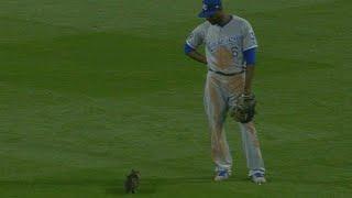 KC@STL: Kitten runs on the field before Molina's slam