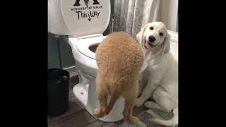Funny and Cute Cat and Dog compilation 2018 #5 - FunnyAnimals