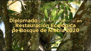 Diplomado en Restauración Ecológica de BosqueDeNiebla 2020