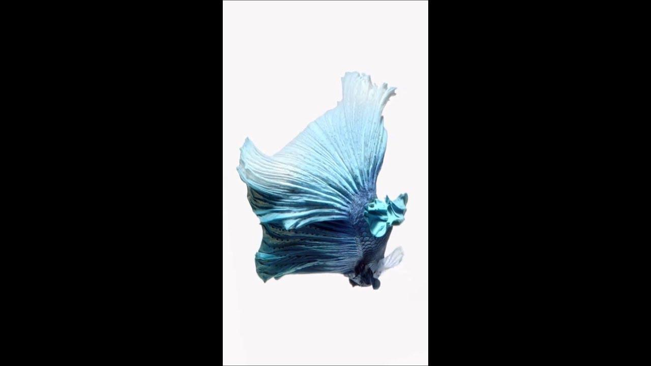 live wallpaper ios 9 blue fish youtubelive wallpaper ios 9 blue fish
