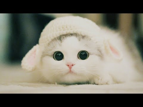 Cute Kittens Will Melt Your Heart - Kittens That Will Make You Fall In Love