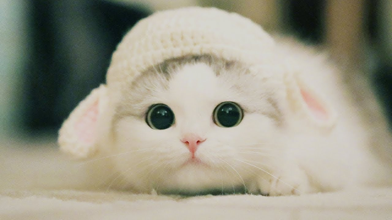 Cute Kittens Will Melt Your Heart