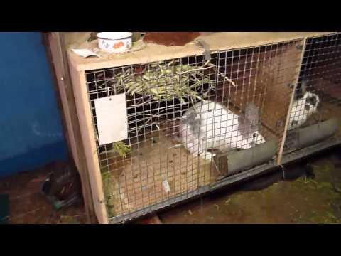 клетки для кроликов в гараже