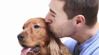 ¿Cómo entrenar a tu perro?