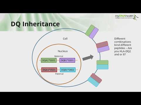 Understanding the Genetics of Coeliac Disease