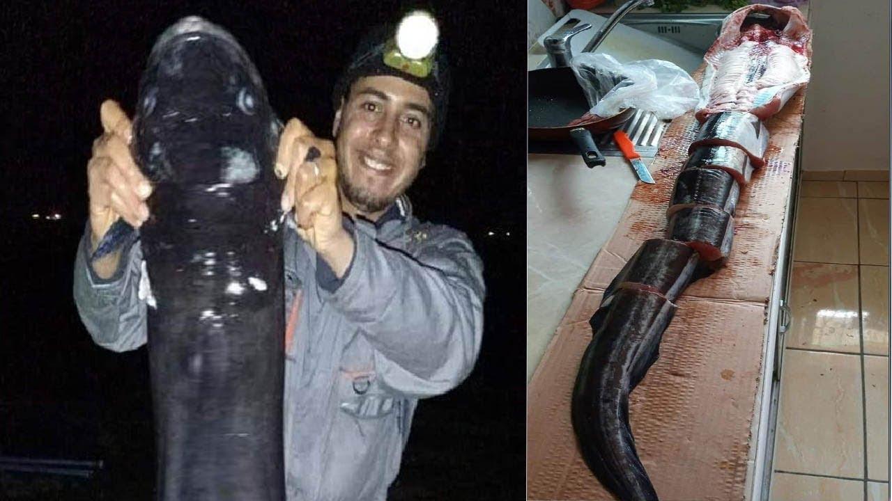 صيد و تنظيف سمك ثعبان البحر العملاق الصنور الضخم مع الرايس ياسين