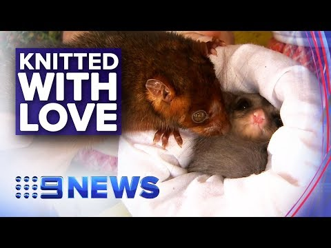 Crafty Crew Knits Cosy Items For Fire Affected Animals | Nine News Australia