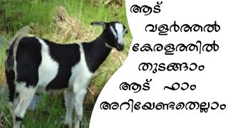 How to Start A Goat Farm in Kerala