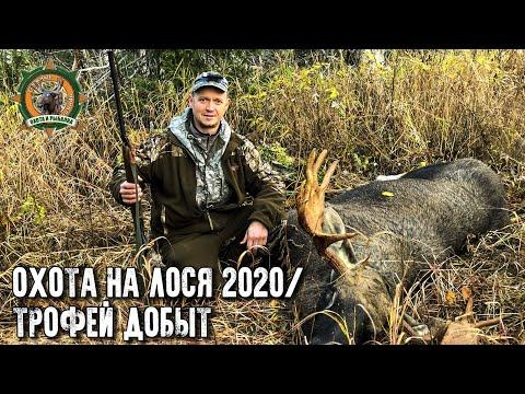 Охота на лося 2020/Добыли трофейного быка/Лицензия закрыта