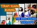 Terapi Suara Burungthe Bird Sound Therapy   Mp3 - Mp4 Download