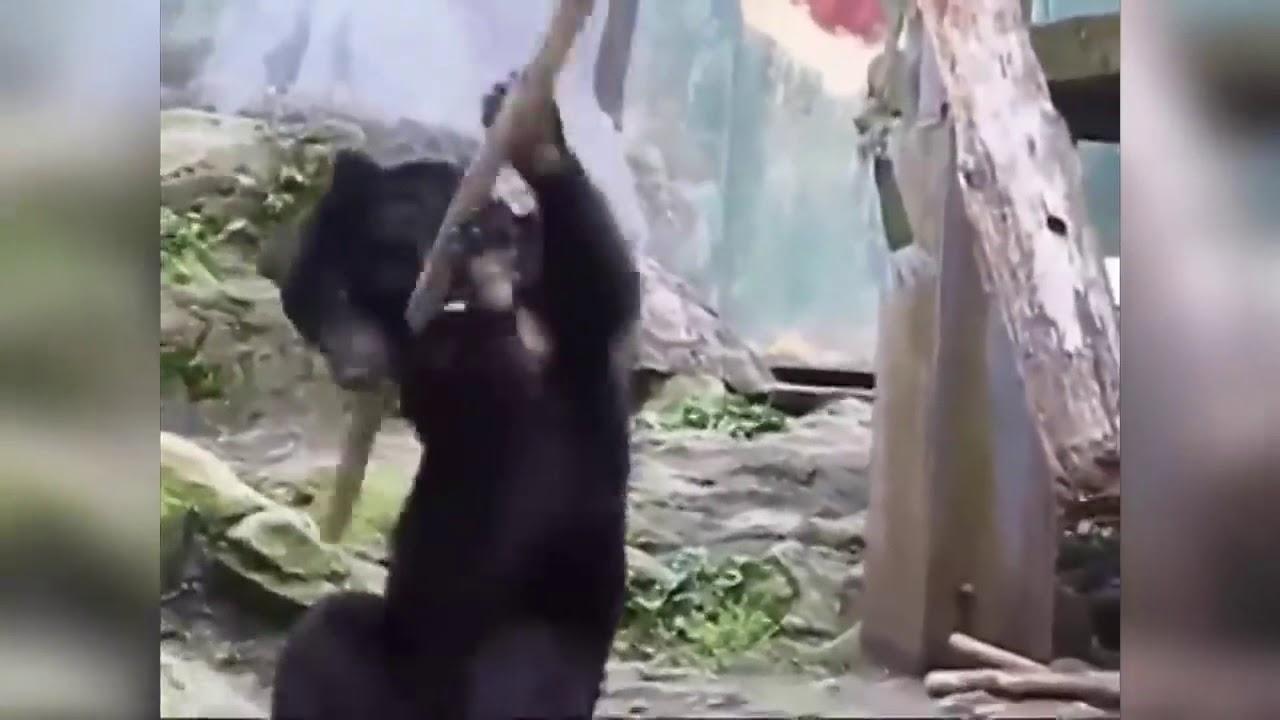 Открытка, смешной медвежонок гиф