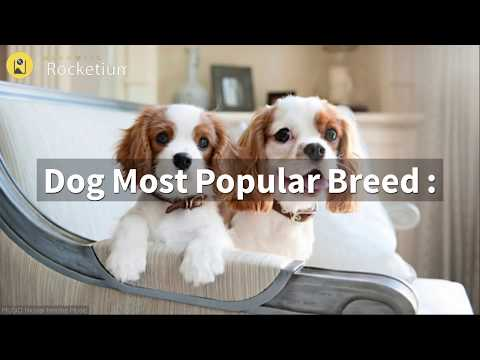 top-10-dog-breed-in-india-|-surat-|-gujarat