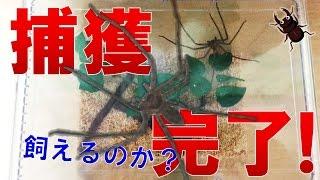 昆虫採集☆カブトムシ☆クワガタムシ 捕獲完了!昆虫ではないけれど…】(...