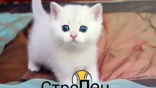 ♪Кто твой котёнок по знаку зодиака♪