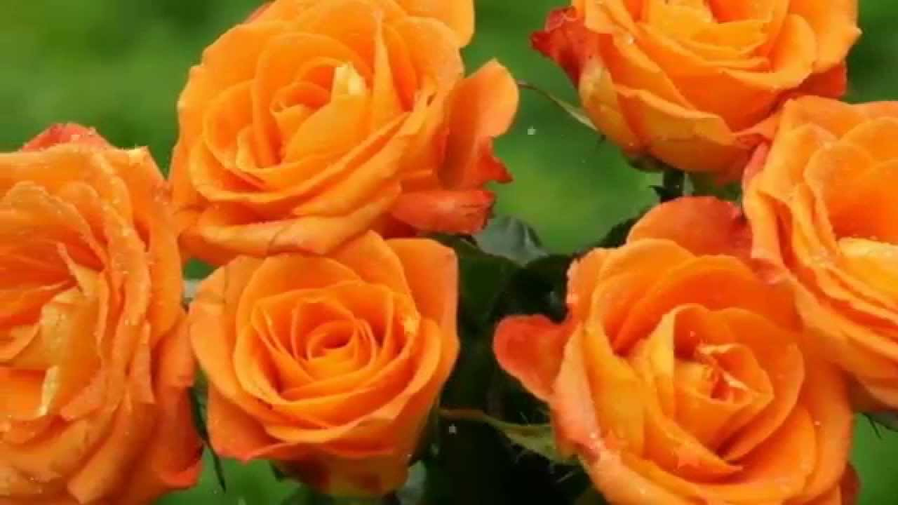 Most beautiful flowers in the world and wallpapers youtube izmirmasajfo Gallery