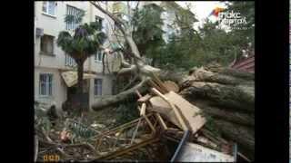 В Сочи дерево упало на дом(, 2013-12-13T15:49:11.000Z)